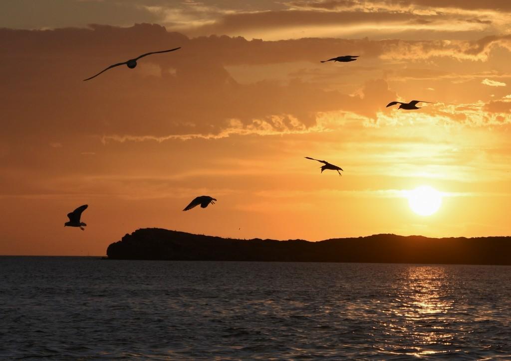 Sunset Scavengers_DSC8487 by merrelyn