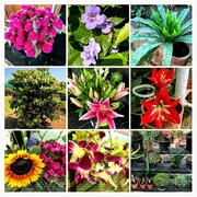 8th Nov 2017 - COLLAGE of flowers at the farm