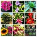 COLLAGE of flowers at the farm by veengupta