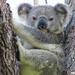 it's hard being green by koalagardens