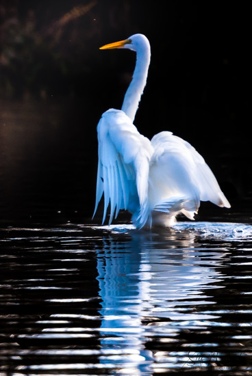Another Egret Vision by stefneyhart