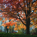 The Four Seasons Tree: I Give You Fall  by alophoto