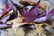 9th Nov 2017 - Dried leaves