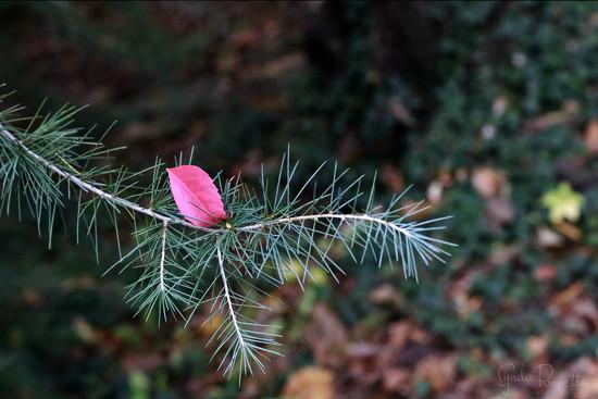 Autumn Color by lynbonn
