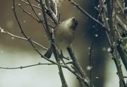 9th Nov 2017 - oh no. Snow!