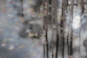 9th Nov 2017 - marsh abstract