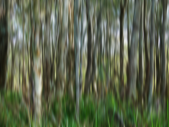 Into the Woods ICM by onewing
