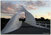10th Nov 2017 - Te Rewa Rewa Bridge...