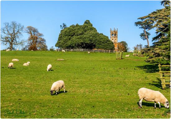 Sheep May Safely Graze by carolmw