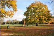 10th Nov 2017 - The colour of autumn
