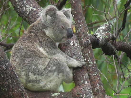 50 shades of grey by koalagardens