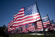 10th Nov 2017 - Veterans Day