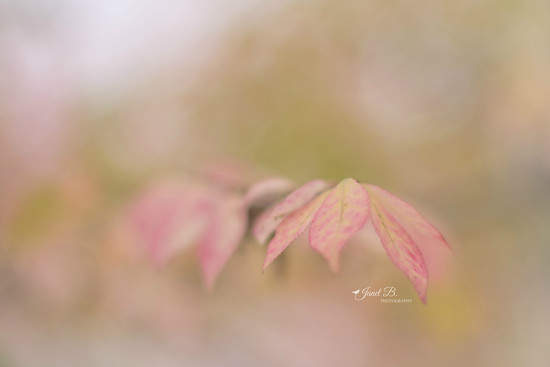Dainty Leaves by janetb