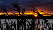 10th Nov 2017 - Grassy Sunset