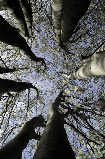 Favourite Tree by redandwhite