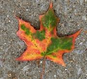 10th Nov 2017 - Leaf