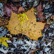 10th Nov 2017 - Fallen And Forgotten