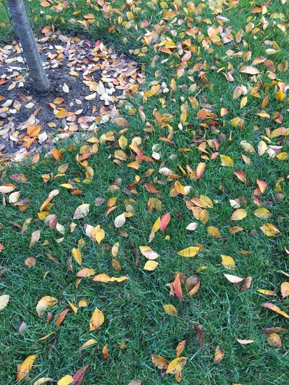 The Leaves are Falling, The Leaves are Falling by andewein