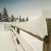 Winter Fenceline