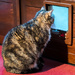 Prime-Time Cat TV!