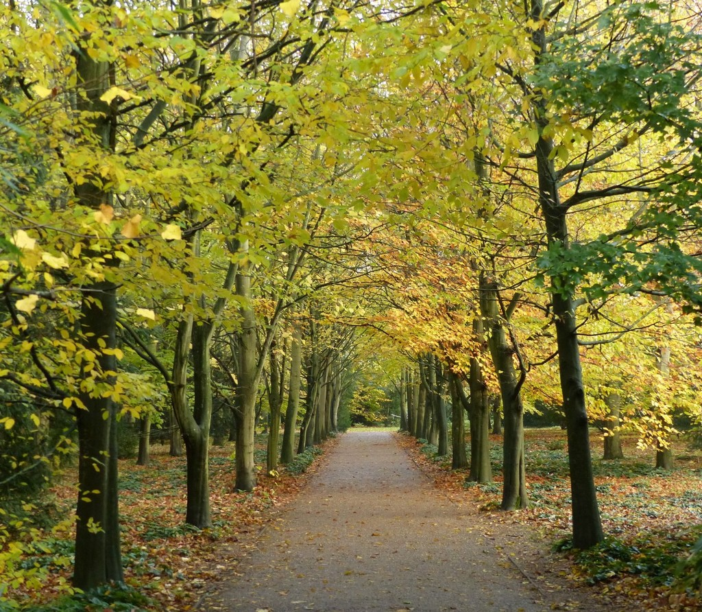 Autumnal Avenue  by foxes37