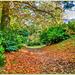 A Leafy Path