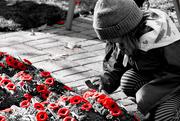 11th Nov 2017 - Remembrance Day