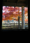 12th Nov 2017 - Autumn out the Cabin Window