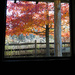 Autumn out the Cabin Window