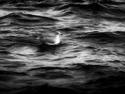 12th Nov 2017 - afloat