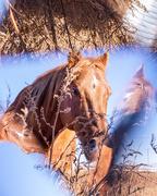 11th Nov 2017 - vortographic horse