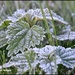 Frosty leaves by rosiekind