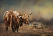 14th Nov 2017 - Highland cattle