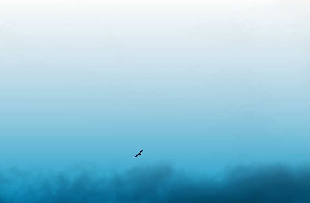 Bird in Sky by gq