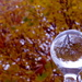 Autumn Refracted In a Bottle Stopper by 30pics4jackiesdiamond