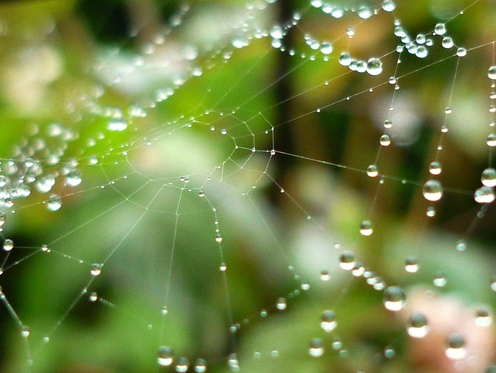 Nature's diamonds by countrylassie