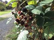 14th Nov 2017 - berrys