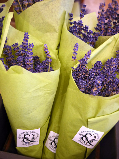 Lavender Cones  by gq