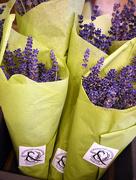 14th Nov 2017 - Lavender Cones