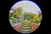 15th Nov 2017 - Garden view