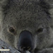 just chillin by koalagardens