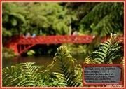 16th Nov 2017 - Poets Bridge ... Pukekura Park...