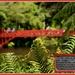 Poets Bridge ... Pukekura Park...