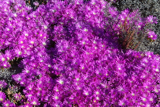 Outback Wildflowers of SW of Western Australia 10 by leestevo
