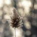 Pampas Grass Bokeh by farmreporter