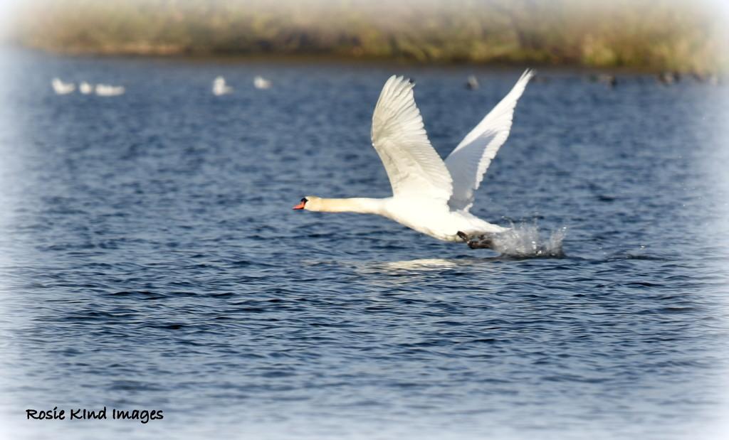 Taking off by rosiekind