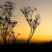 Tonight's sunset by shepherdmanswife