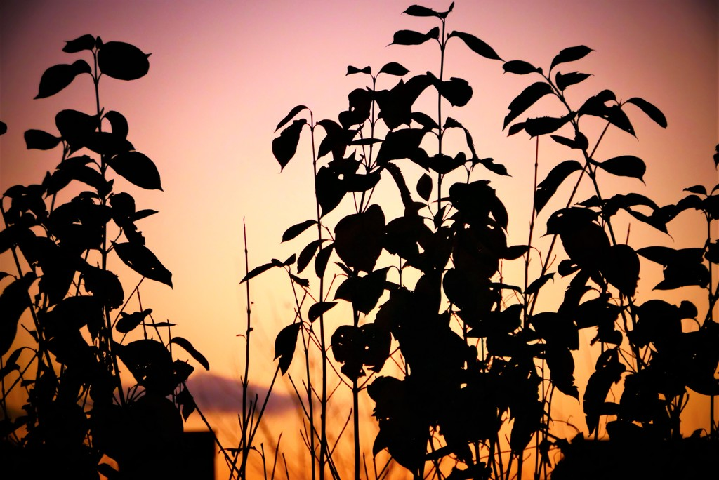 Sunset Silhouettes by carole_sandford