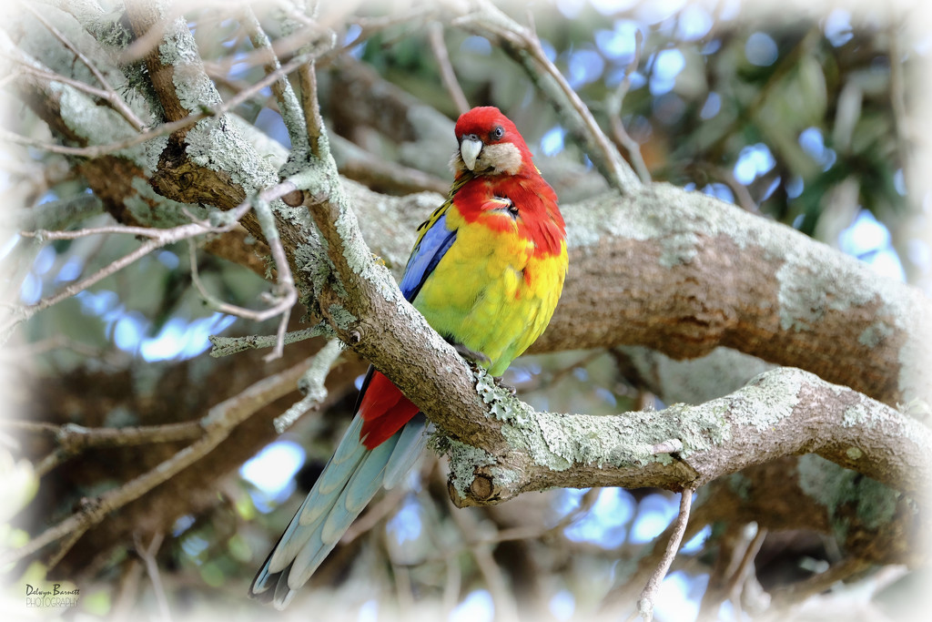 Colourful visitor by dkbarnett