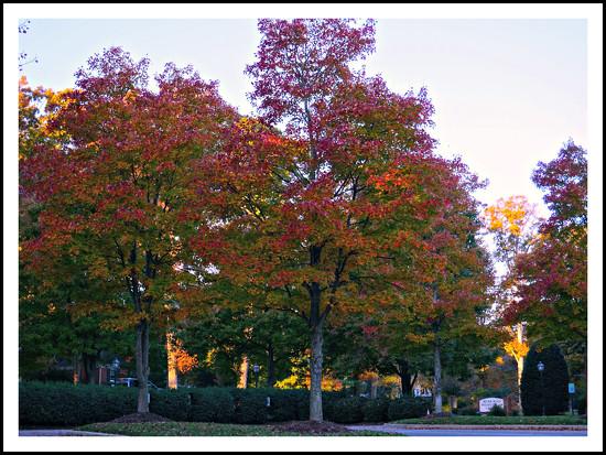 Fall Foliage by allie912